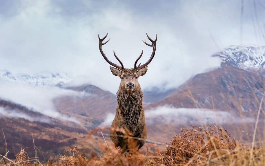 megeve rennes nature